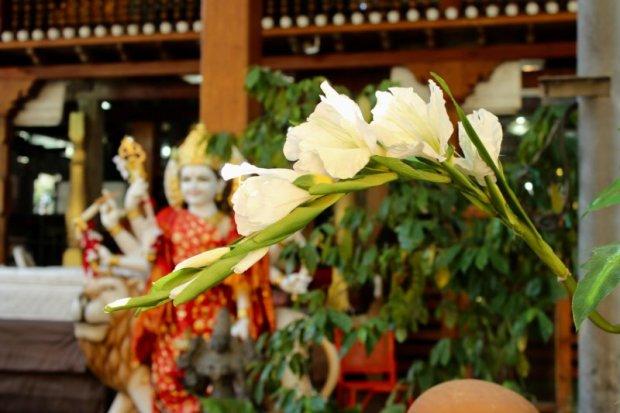 Gangaramaya Temple flowers, Colombo