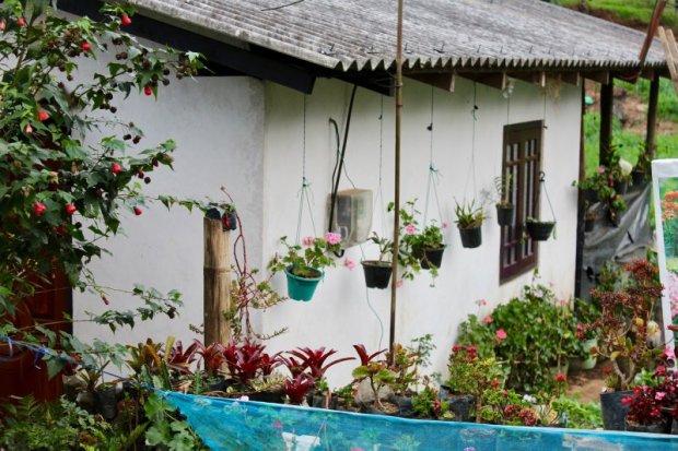 Nuwara Eliya house and garden