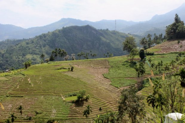 Rice terraces of Sri Lanka's Hill Country