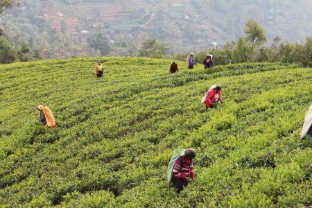 Kandy to Nuwara Eliya: Sri Lanka's Tea Country
