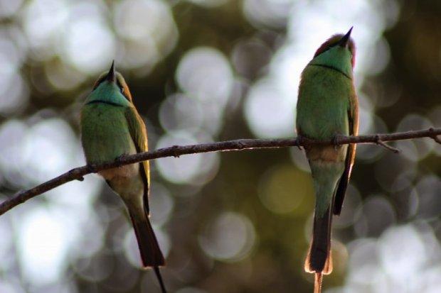 Yala National Park birdlife