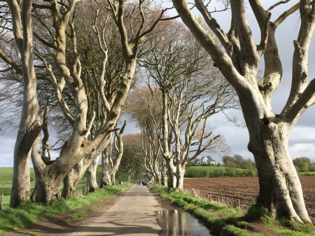 Dreaming about travel: he Dark Hedges, Northern Ireland