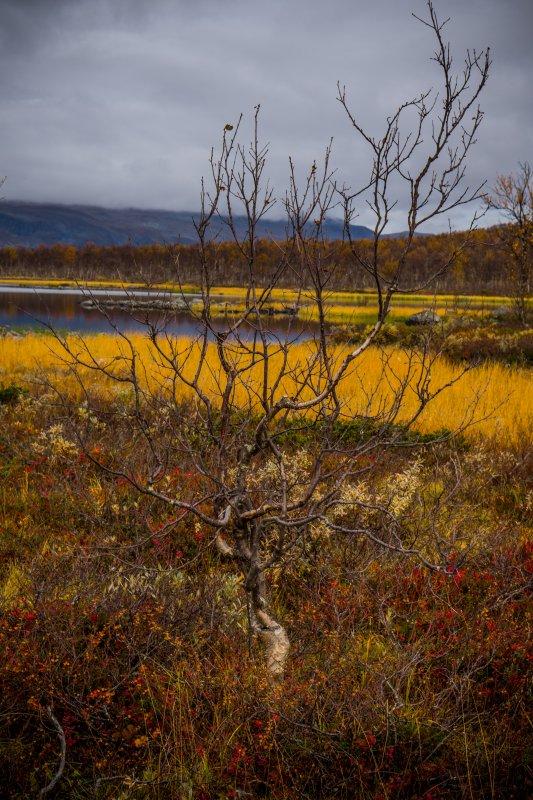 Autumn colours, Kilpisjärvi Lapland