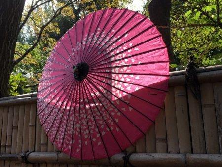 Japanese parasol, Ueno Park