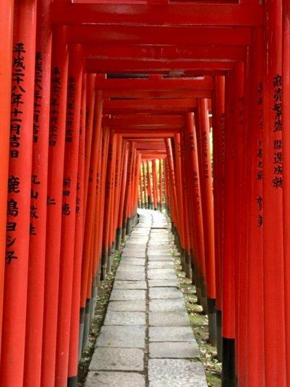 Torii tunnel leading toNezu Shrine, Tokyo