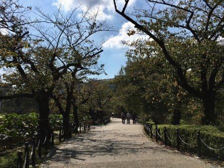 Ueno Park cherry tree walkway