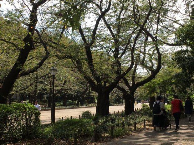Ueno Park: Tokyo's hanami party place