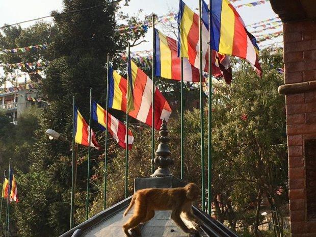 Swayambbunath, the Monkey Temple