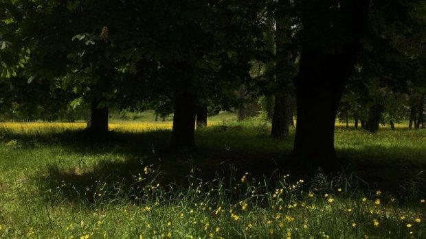 Montenegro drive: Cetinje black forest