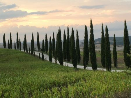 Italy by train and car: Val d'Orcia cypresses