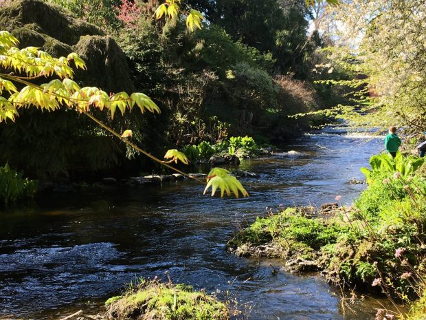 Mount Usher riverside garden east of Ashford, Wicklow