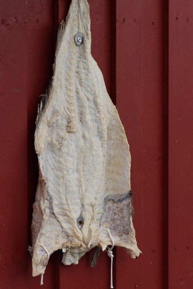Hanging cod, Henningsvær, Lofoten