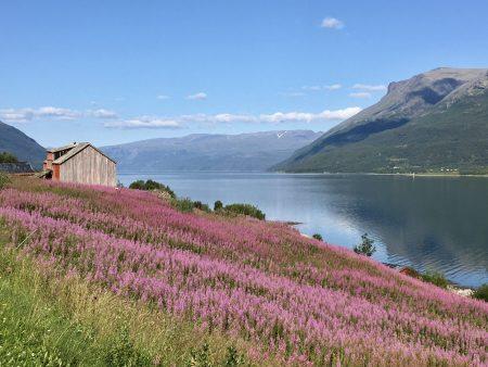 Norway by motorhome: Lyngenfjord scenery