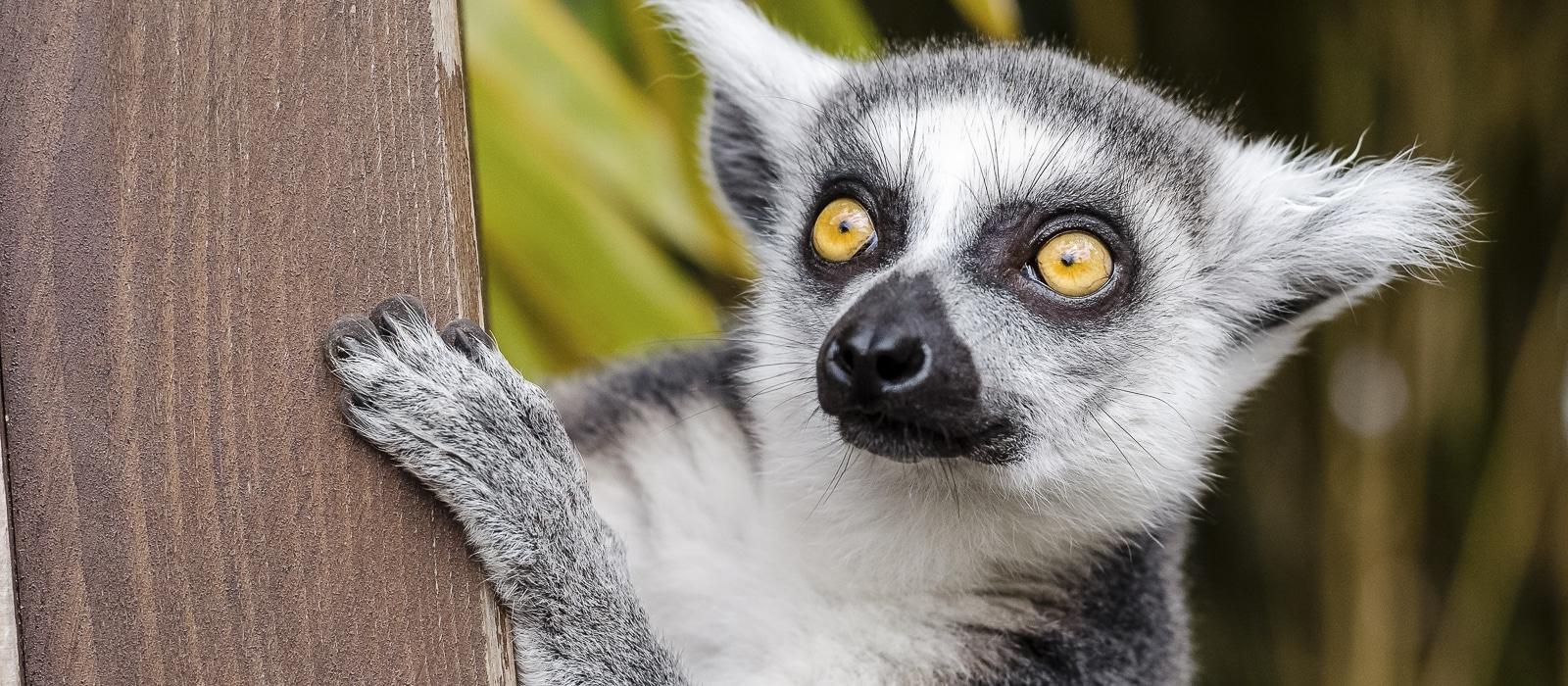 img-diapo-entete - Madagascar-1600x700-14.jpg
