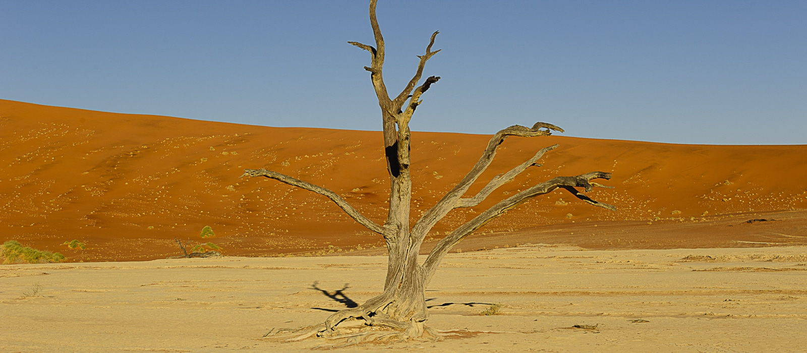 Dead Vlei, Namibie - les Routes du Monde