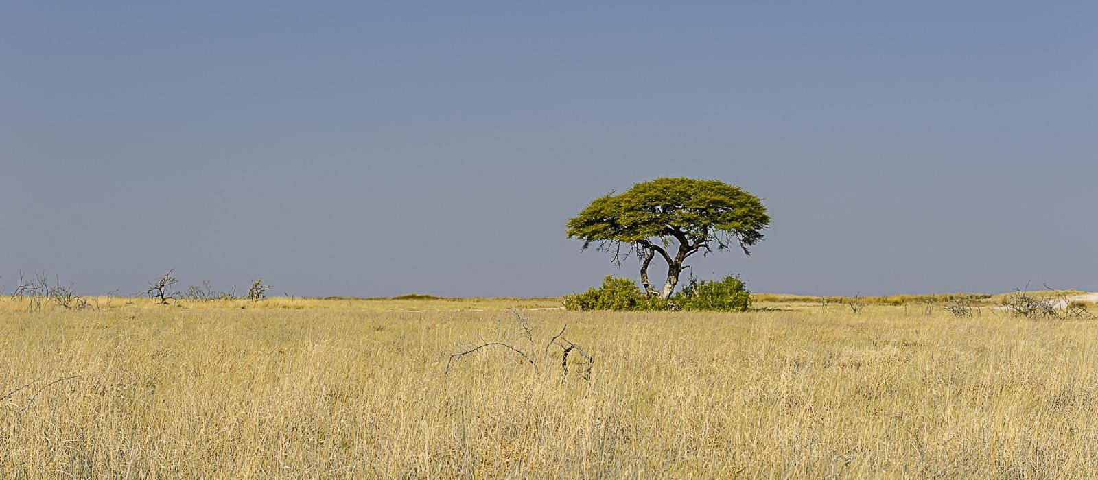img-diapo-entete - Namibie-1600x700.jpg