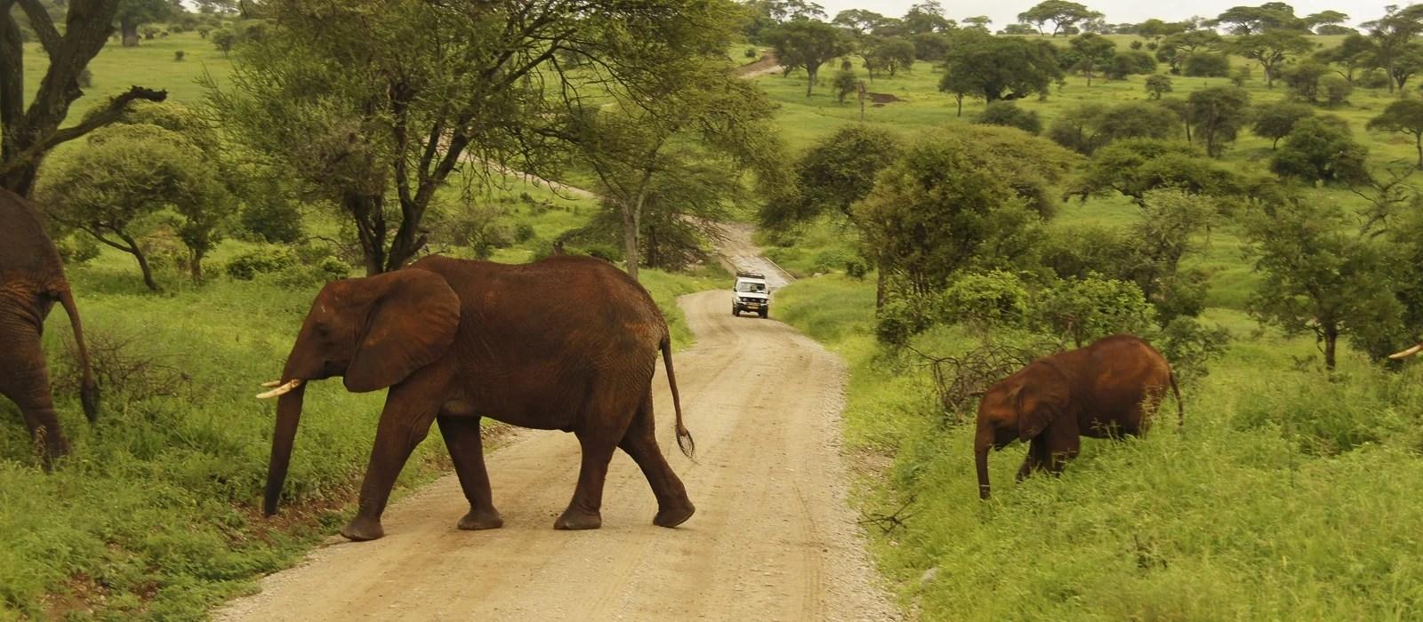 img-diapo-entete - Tanzanie-1600x700-11.jpg