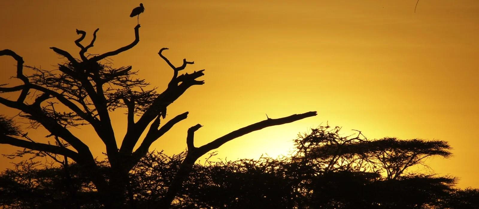 img-diapo-entete - Tanzanie-1600x700-12.jpg