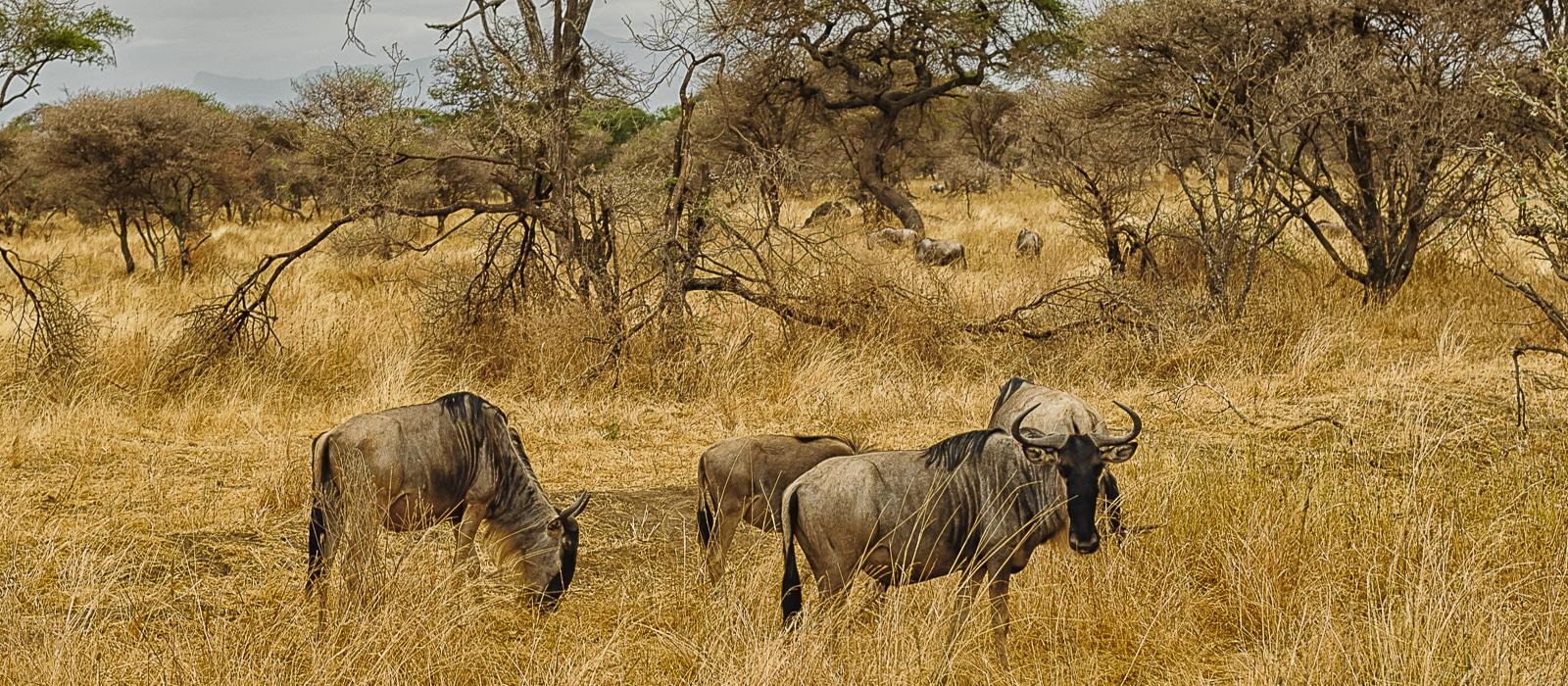 img-diapo-entete - Tanzanie-1600x700-18.jpg
