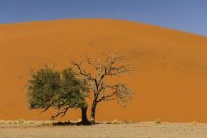Dune 45, Sossusvlei, Namibie - les Routes du Monde