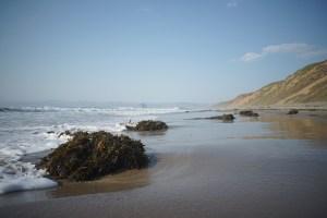 kelp patties on beachwith Morro Rock in background