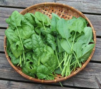 Leafy greens help the gut microbiome