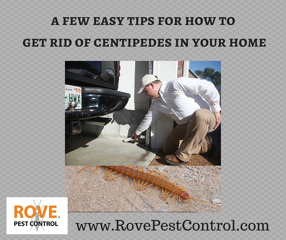 A few easy tips for how to get rid of centipedes in your home  Rove Pest Control