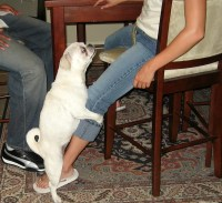 Why Do Dogs Hump? Dog Sexuality 101 | Rover Blog