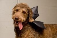11 Terrifying(ly Hilarious) Dog Costumes