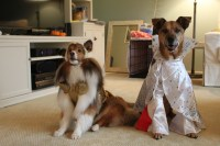 DIY Dog Costumes for All Shapes and Sizes | Rover.com