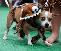 11 Terrifying(ly Hilarious) Dog Costumes | Rover Blog