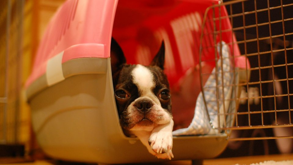 what is the best living room furniture for dogs virtual design dog crates puppies from soft sided to grade car