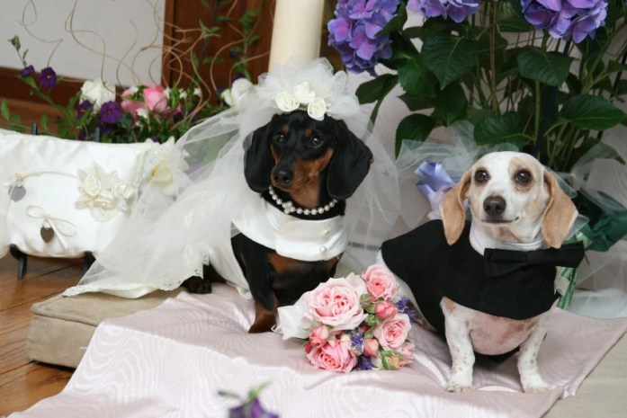 Image result for Wedding Dresses for dogs