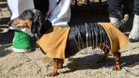 9 Dogs Who Totally Nailed Halloween | The Dog People by ...