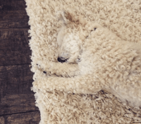 The 8 Best Moments of Dog Camouflage | The Dog People by ...