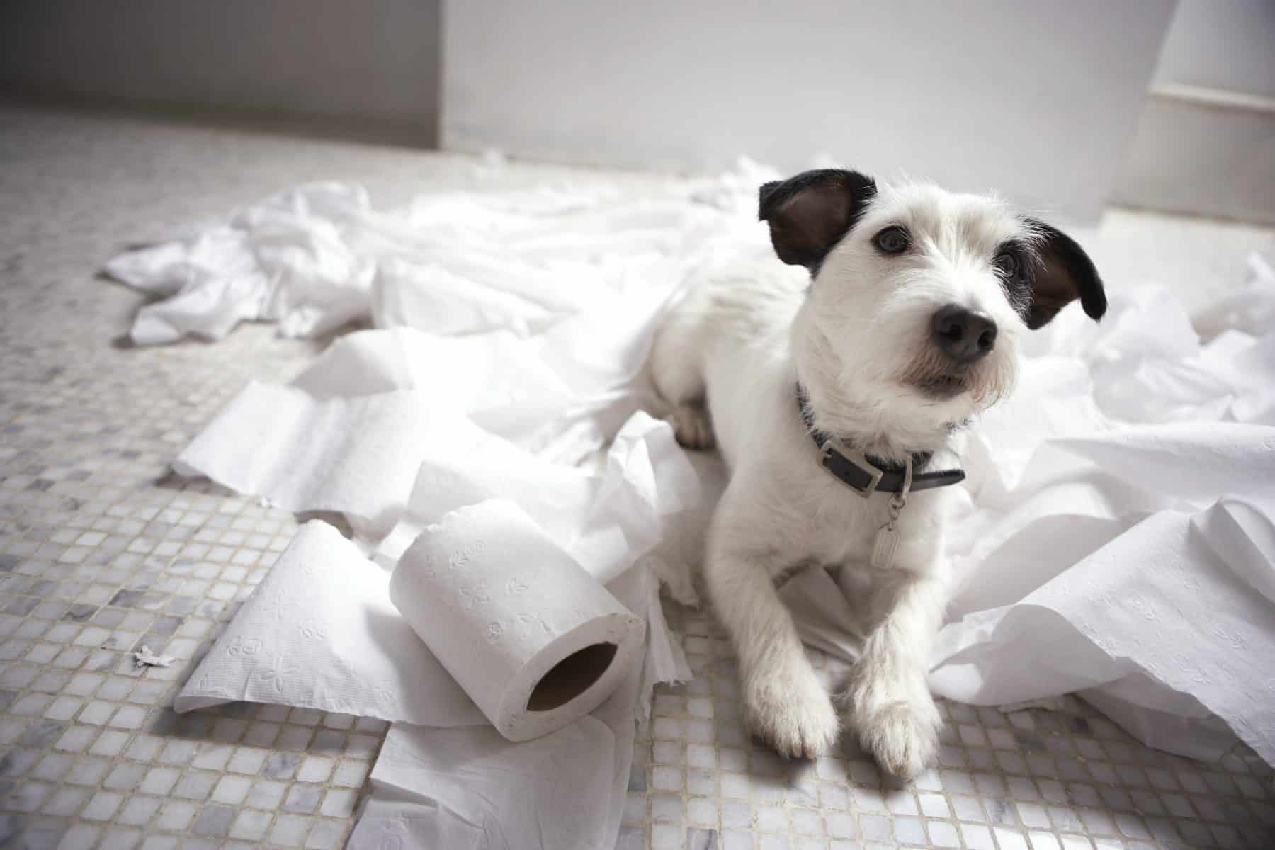 The 6 Signs of Separation Anxiety in Dogs