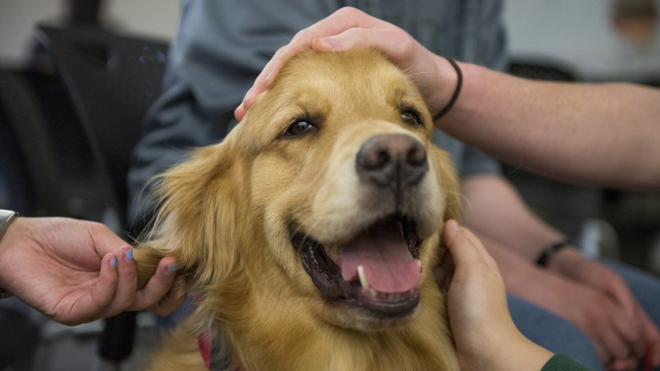 how service dogs help