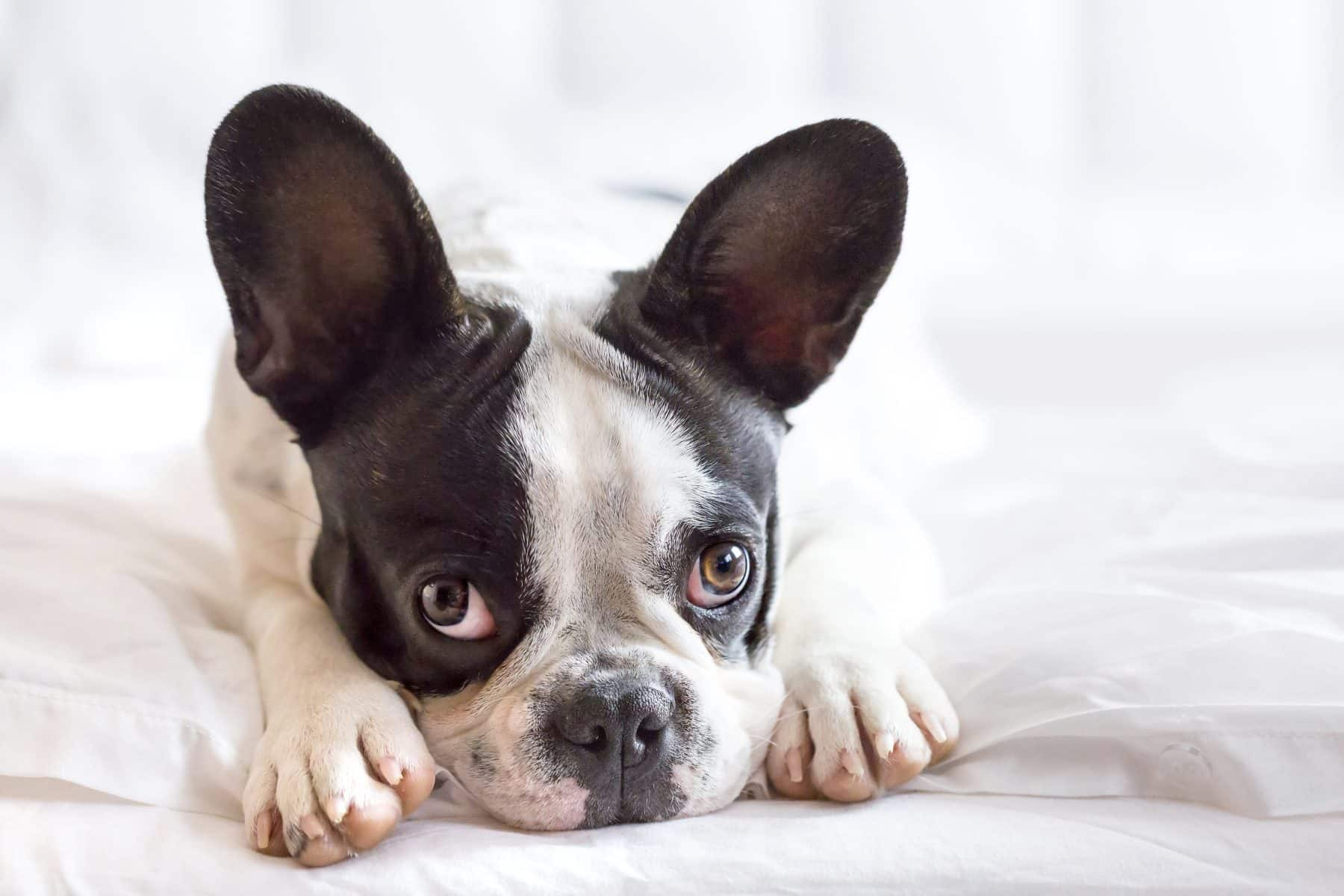 15 Signs That Your Dog Is Stressed
