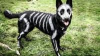 The 8 Best Pet Halloween Costume Ideas