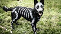 What's the Best Dog Halloween Costume of All Time? [Quiz ...