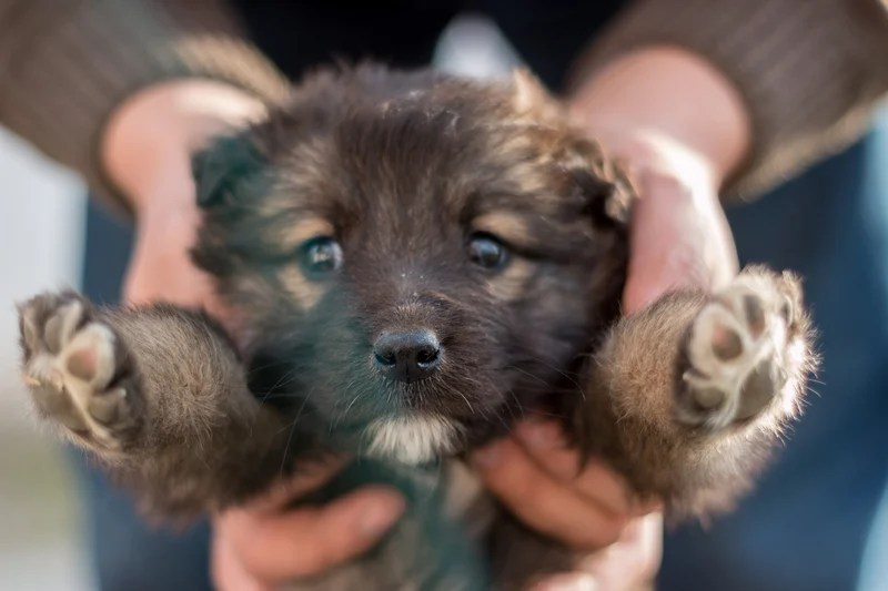 Quiz Pick The Puppy That Fits Your Personality The Dog People By Rover Com
