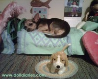 6 Dogs Who Found a Bed That Was Just Right | The Dog ...
