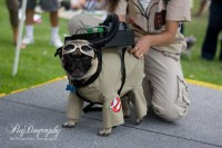 Dog Ghostbustersthe Remake We Can All Get Behind
