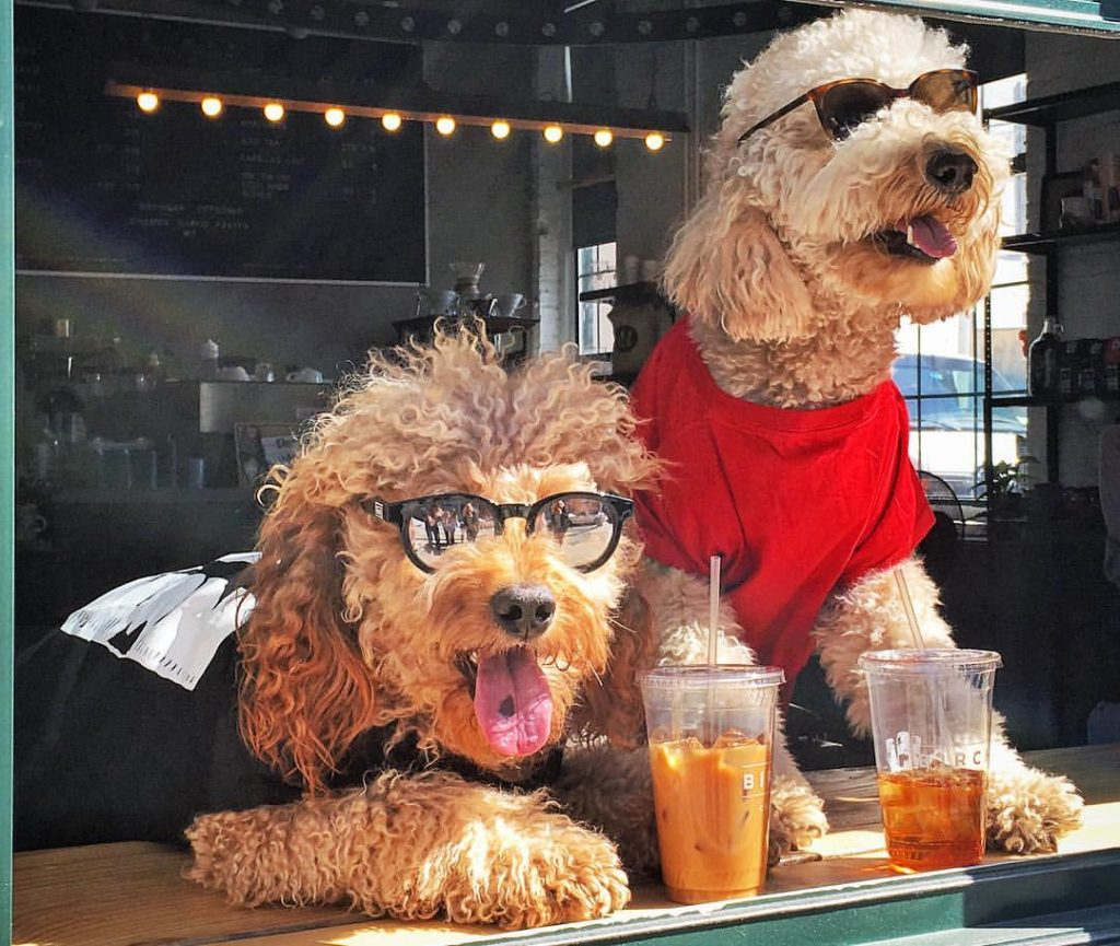 8 DogFriendly Coffee Shops in NYC  Rovercom