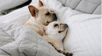 5 Big Reasons You Should Definitely Let Your Dog Sleep in ...