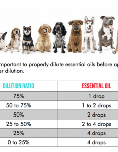 From measuringflower also are essential oils safe for your dog the people by rover rh