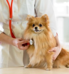 congestive heart failure in dogs symptoms you don t want to miss [ 5179 x 3453 Pixel ]
