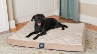 Best Dog Beds for Labs | 5 Dog Beds for Your Labrador ...