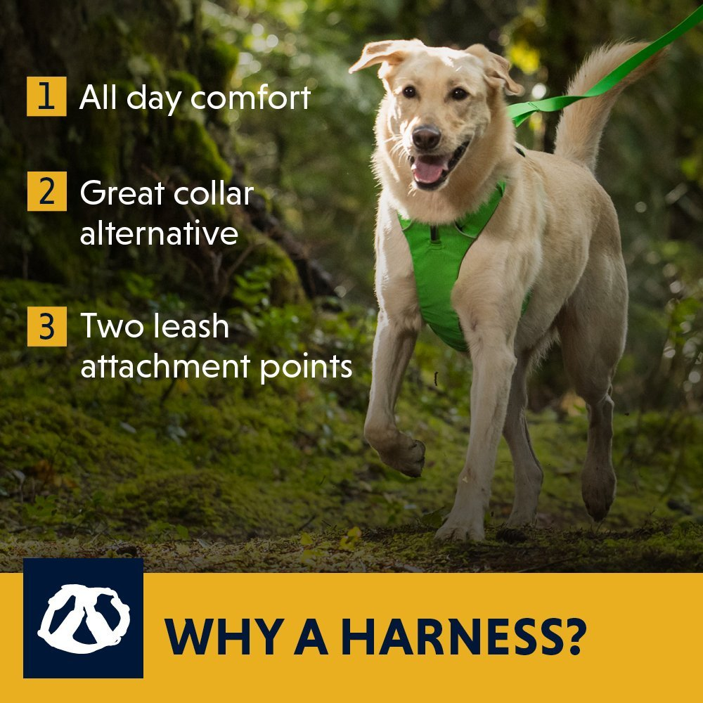 the 5 best harnesses