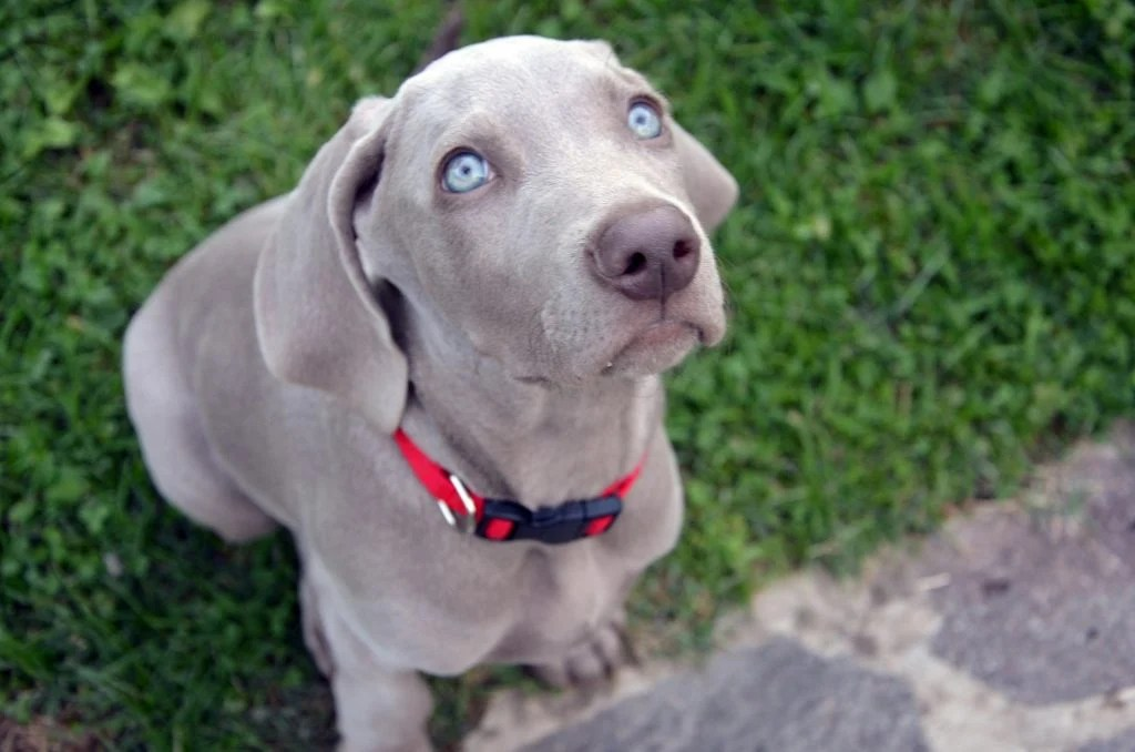 9 dogs with blue